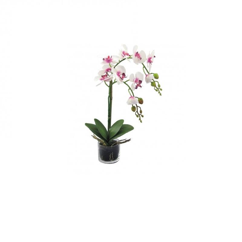 Vaso orchidea adriani rossi brighter home for Orchidea pianta